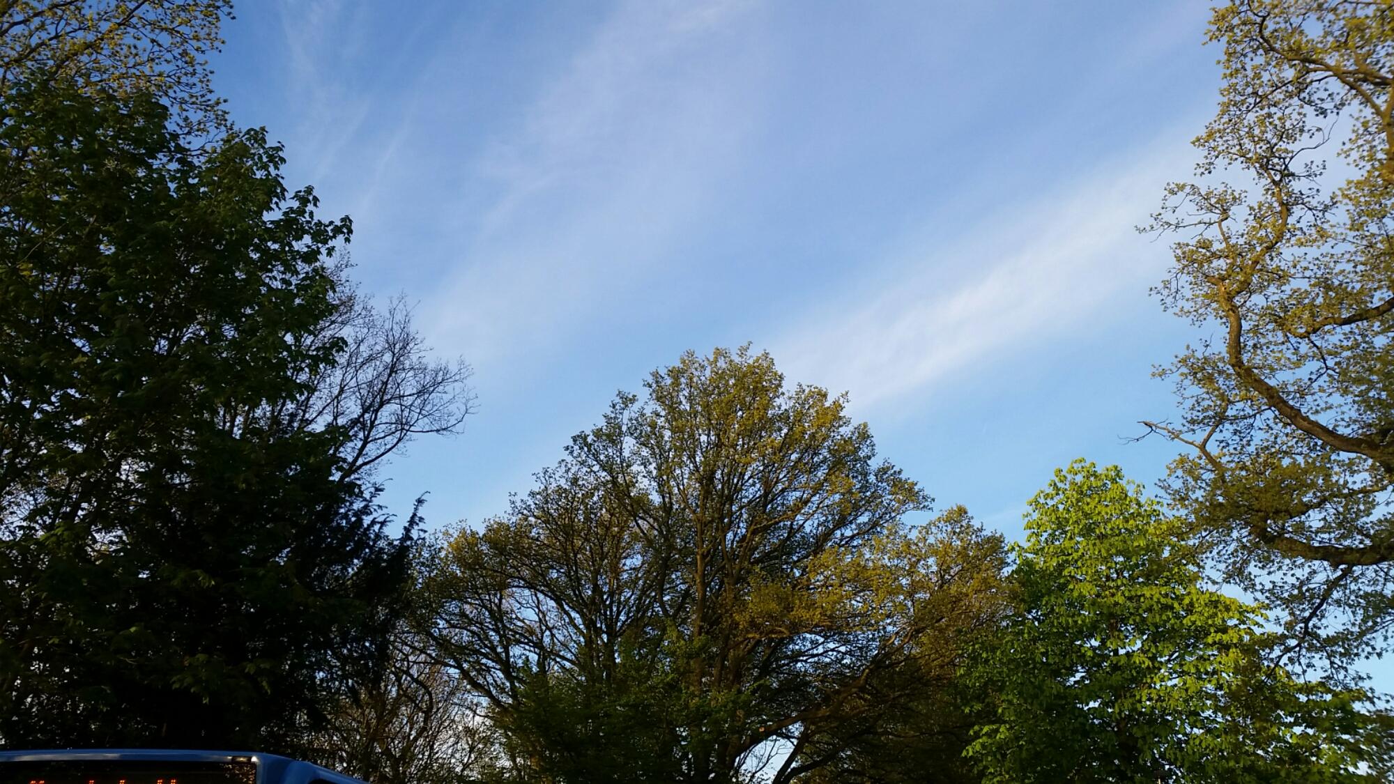 Wald mit blauem Himmel