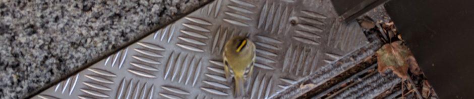 Vogel bei Sparkasseneingang